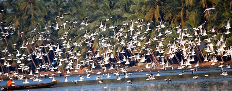 Andaman Islands And South India Birding Tour