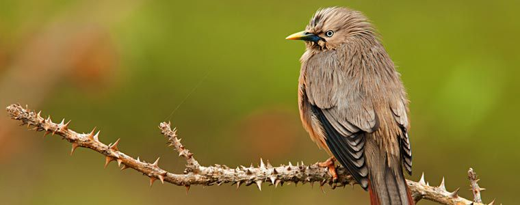 Birding In The Hills And Mountains Of India