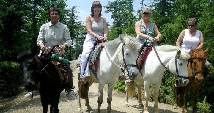 Shimla Kufri Chail Mashobra Naldehra Tour Package